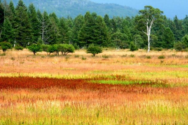 秋を探しに 草紅葉が美しい名所10選 NIKKEI STYLE