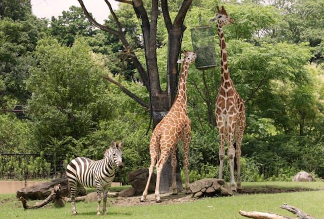 1位のよこはま動物園ズーラシアでは「アフリカのサバンナ」など、それぞれの動物本来の生息環境に近づけようとしている