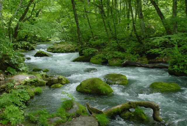 新緑が美しい奥入瀬渓流。雨上がりはコケの色も鮮やかに!(写真:japan-guide.com)
