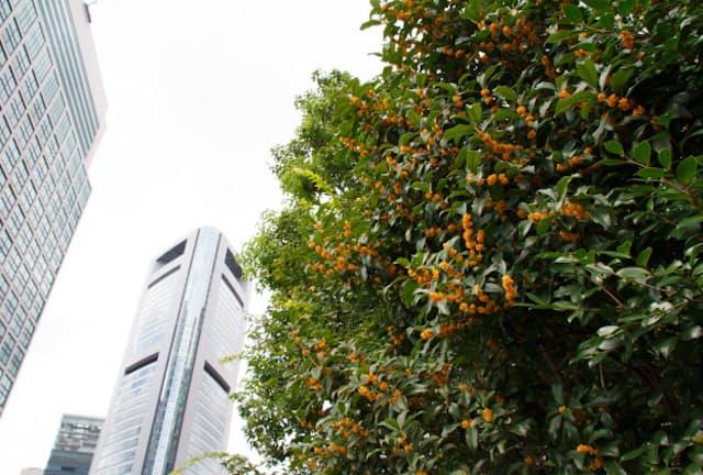 街角に金木犀(きんもくせい)の香りが漂う季節になった(写真はイメージ=PIXTA)