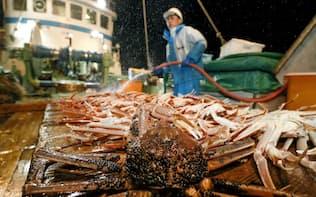 漁が解禁され、漁船に引き揚げられたズワイガニ(6日、兵庫県豊岡市沖)