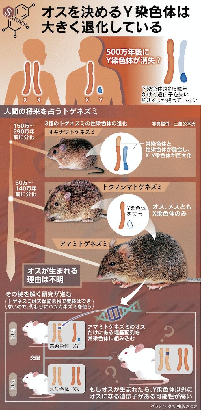 男性 500万年後に消滅?: 日本経済新聞