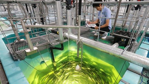 水産大国再興なるか(3) 養殖場は海から陸に