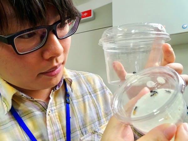 アリの研究成果は海外の研究者からも驚かれた(慶応大修士1年の岩井さん)