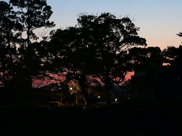 佐賀城跡に立ち並ぶクスノキ。堀の水面に朝焼けが映える=石井理恵撮影
