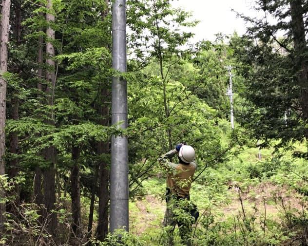 「道なき道」を進み電柱や電線を点検する(静岡市葵区の井川地区)