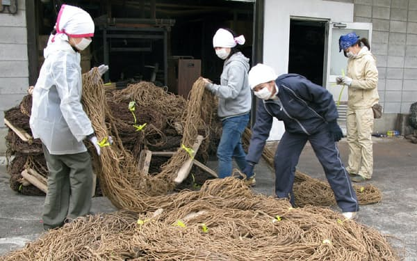 藁縄でできた漁網(静岡県沼津市)