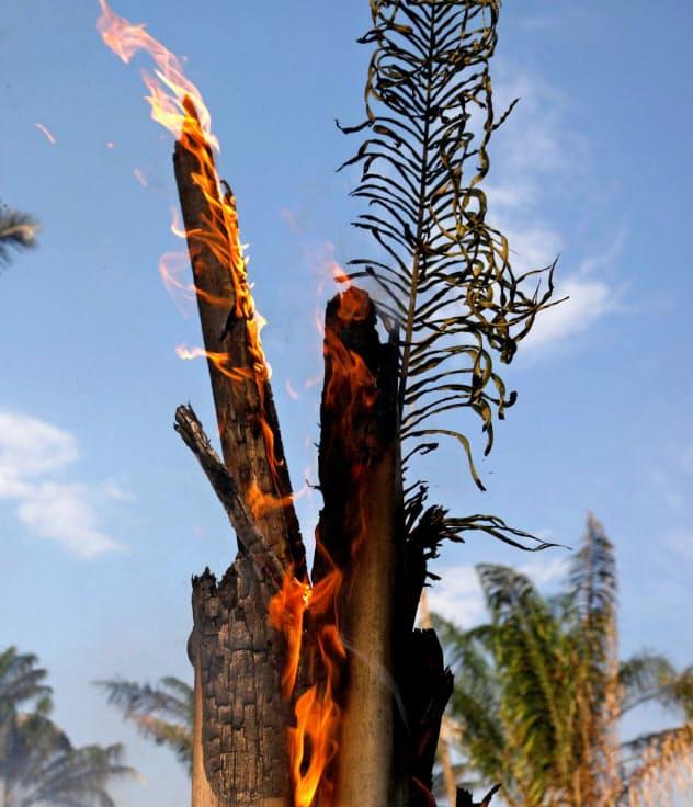 アマゾンでは森林火災が相次いでいる(20日、ブラジル北部アマゾナス州)=ロイター