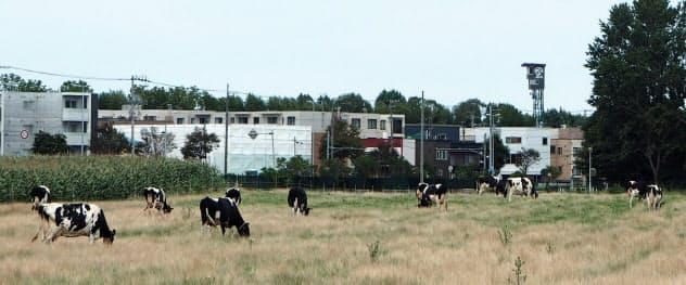 北大農場は市街地のど真ん中にある(写真上)。北大マルシェの宮脇店長は「札幌のど真ん中でおいしい牛乳がつくれるという価値を残したい」と意気込む