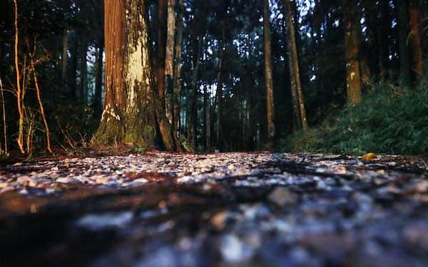 小早川秀秋が陣を構えた松尾山。険しい道が山頂まで続く=上間孝司撮影