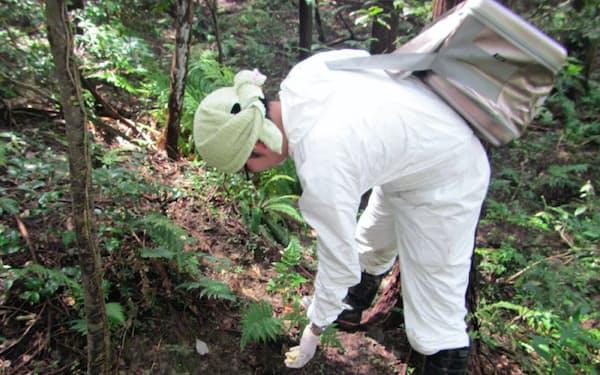 ワクチン入りのエサを散布し、感染イノシシの拡散を防ぐ(愛知県)