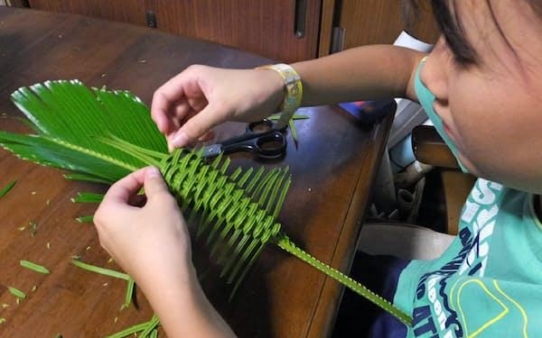 ソテツの葉の虫かごを編む小学生