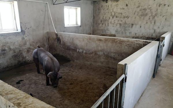 ほとんど空になった豚舎も少なくない(遼寧省大連市の養豚場)
