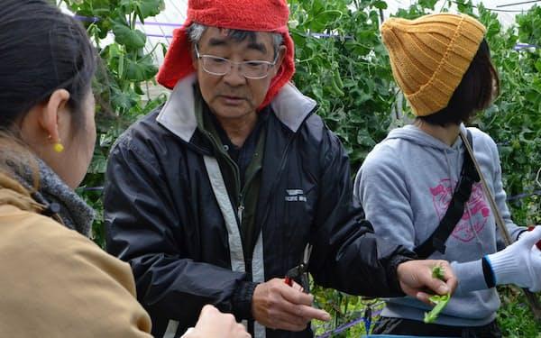 才津さんは多くの野菜を育てている(長崎県五島市)