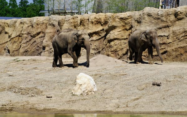 アジアゾウの放飼場は国内最大規模