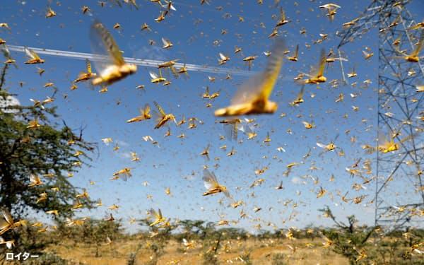 サバクトビバッタの群れが南アジアにも飛来している(ケニアのナニュキ近郊)=ロイター