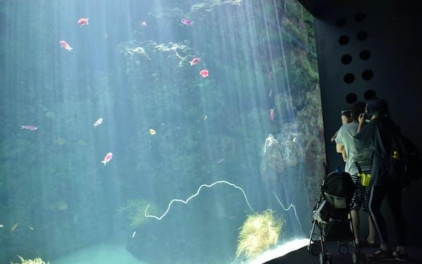 サンゴ礁の海を再現した水槽では色とりどりの魚が泳ぐ