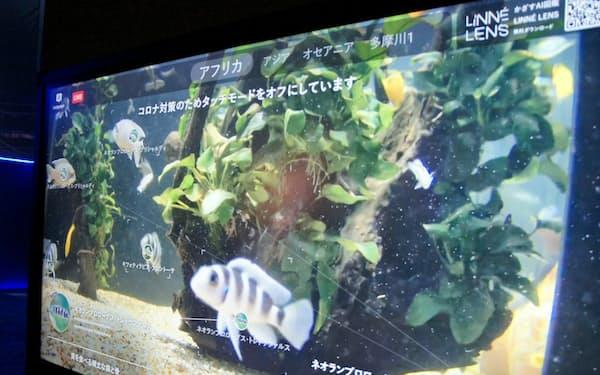 水中カメラの映像をAIが解析し、魚の解説と一緒に映す(川崎市のカワスイ 川崎水族館)