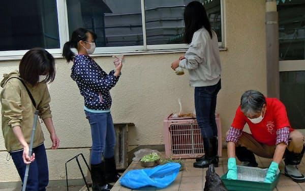 新型コロナに伴う休校期間中、チャボの世話をするボランティア(5月、東京都西東京市の保谷第二小学校)