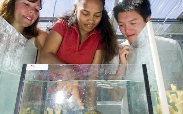 グレートバリアリーフ内にあるOIRSでは学部生も海洋科学を学ぶ