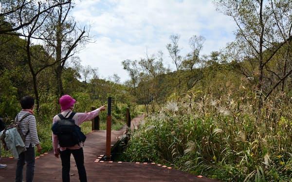 湿原の真ん中に木道が整備されている