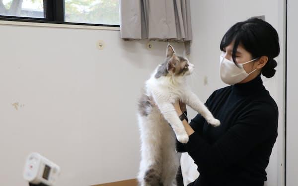 計測技術を活用し、人と動物のより良い共生につながる研究を進める(相模原市)