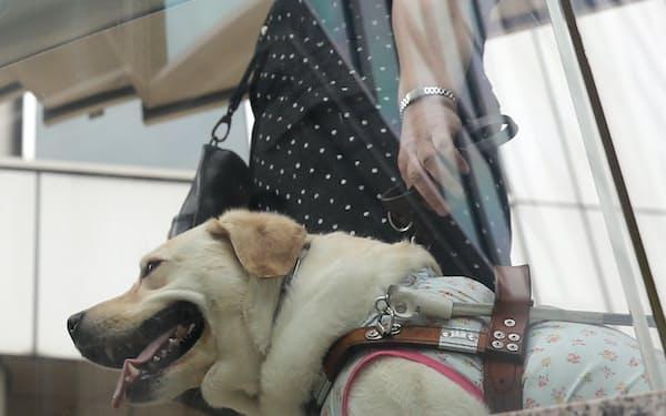 カナダではコロナ禍で盲導犬の訓練が滞り、視覚障害をもつパラアスリートの練習に影響が出ている