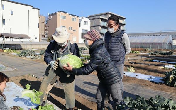 体験農園で白菜を収穫する大久保さん(中)(東京都世田谷区)