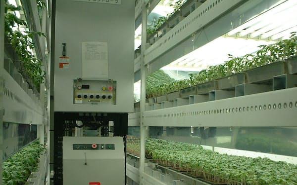 植物工場内ではプログラミングされた装置で培養液を補給し、カメラで生育を観察する
