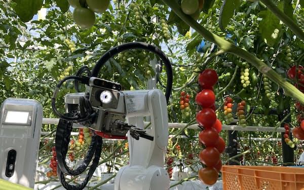 トマトを収穫するデンソーのロボット