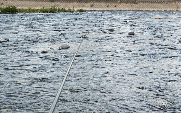 毛バリ釣りなら水深の浅い瀬で十分だ(神奈川県小田原市の酒匂川)