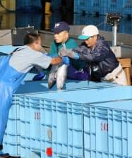 一本釣りのカツオを水揚げする人たち(9月、宮城県気仙沼港)