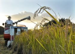 コメを収穫する農家(12日午後、福島県二本松市)=写真 柏原敬樹