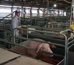 中野目畜産は設備を更新し生産能力を高める(福島県泉崎村)