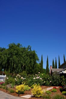 筆者の自宅玄関から見えるシリコンバレーの青空