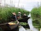 水耕栽培するトマトの手入れや収穫は小舟の上で行う(ミャンマー北東部シャン州のインレー湖)