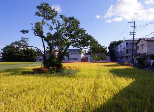 屋敷の北東の水田の中にある末社。屋敷の範囲を示すために建てられたとされ、かつては屋敷の四方にあったとみられる