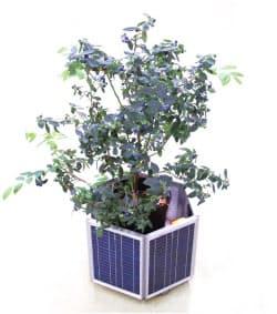 図1 植木鉢ロボット「Plantroid」。30キログラムまでの農作物(植物)を載せて、明るい方向に自動的に移動する機能を持つ