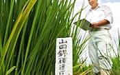 「山田錦」など酒造好適米の価格は上昇が続く(兵庫県内の研究用水田)