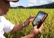 携帯端末で日々の農作業記録を蓄積できる「アグリノート」。勘に頼っていた部分をデータ化し、広大な田んぼの管理を効率的に行う(新潟県新発田市)