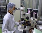 蚕の卵に遺伝子情報を注入し、特殊なたんぱく質を含んだ繭を作らせる