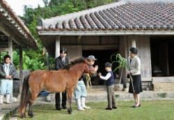 「沖縄こどもの国」を訪問され、与那国馬と触れ合う秋篠宮ご夫妻と悠仁さま(11日、沖縄県沖縄市)=代表撮影共同