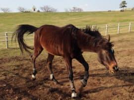 千葉県富津市のマザー牧場では自然体の馬を間近で楽しめる。年末年始も営業