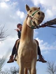 背景の空に抜けるようローアングルで撮ると、主題がはっきりとする(マザー牧場)