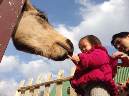 現地で買ったエサを馬にやる子供(マザー牧場)