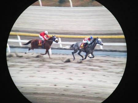 競走馬を流し撮り。背景が斜めにゆがむのはシャッターの特性だ(千葉県船橋市の船橋競馬場)=双眼鏡使用