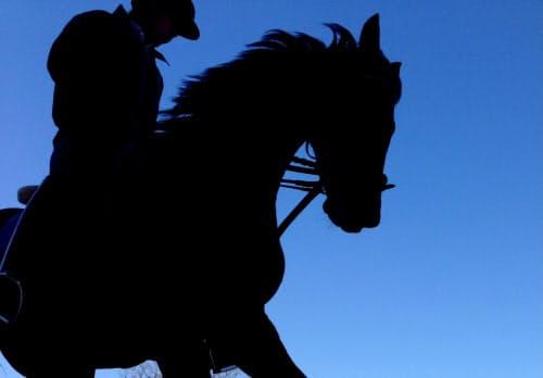 偶然近くの日陰を通った馬が空とのツートーンカラーでまとまった。シルエットにも文字を入れられる(東京都世田谷区の馬事公苑)