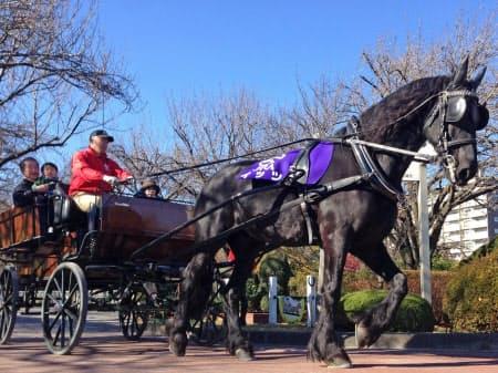 馬事公苑内を走る馬車をローアングルで。連写して脚を上げる瞬間を切り取ろう(東京都世田谷区の馬事公苑)