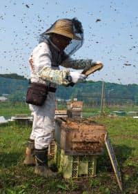 厳しくなる環境下で、養蜂家は群れの維持に注力する