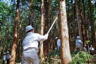 「天然水の森」で森林整備するサントリー社員